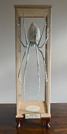 'Filament, the Rain Weaving Spider' by Mister Finch from his 'Familiars' exhibition at Anthropologie