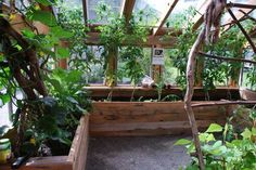 Eco Art: Amateur artist built eco friendly greenhouse from recycled materials---inside view