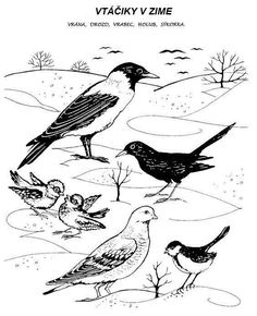 Feeding Birds In Winter, Winter Activities For Kids, Nature Journal, Whimsical Art, Types Of Art, Pyrography, Coloring Pages For Kids, In Kindergarten, Kids Crafts