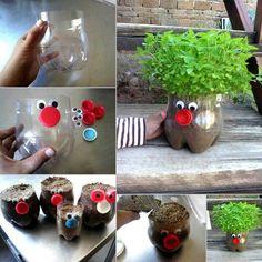 plantes aromatiques dans bouteilles plastic