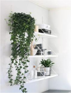 11 Best Indoor Vines And Climbers You Can Grow Easily In Your Home - House Plants - ideas of House Plants - Love growing plants indoors? Some of the best indoor vines and climbers that are easy to grow listed here. Must check out! Plantas Indoor, Interior And Exterior, Interior Design, Design Interiors, Interior Decorating, Interior Plants, Room Interior, Interior Styling, Decorating Ideas