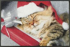 wash+dry by Kleen-Tex: wash+dry by Kleen-Tex: Kollektion Wash N Dry, Sleep, Kitty, Seasons, Ebay, Cats, Animals, Collection, Sport