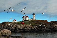 Nubble Light and Gulls - Photograph at BetterPhoto.com