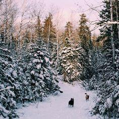 woodsy winter walk // via seek + scout
