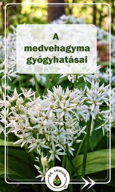 Health 2020, Allium, Herb Garden, Doterra, Natural Health, Natural Remedies, Herbalism, Health Care, Health Fitness