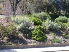California Native Plants Landscaping | Memorial Building Native Plant Garden in Three Rivers, CA