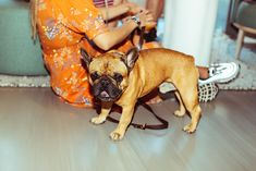 Cosy, French Bulldog, Environment, Store, Animals, Animales, Tent, Shop Local, Animaux