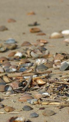 Breskens, treasures of the sea - © Sabrina Ide - 2012