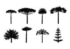 Araucaria silueta vector Trendy Tattoos, New Tattoos, Small Tattoos, Tatoos, Wüsten Tattoo, Robot Tattoo, Tree Tat, Tree Photoshop, Nature Drawing