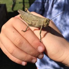 We had a visitor to our garden this morning #bugs #grasshopper #hockingearlylearningfamilydaycare #earlylearning #natureplay
