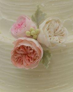 Sugar David Austin Roses