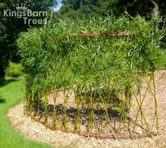 Woven Willow Fence in full leaf during the Summer