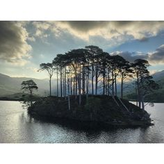 [Photo by natgeo on Instagram] Photo by @jimrichardsonng  Scottish Moments:  Returning to Loch Eilt and the lovely island with a stand of Scots Pines. Sunrise was glorious. The old Caledonian Forest has shrunk from historic levels but it is still a symbol of Scottish wilderness. Continuing our exploration of the Scottish Moors. @natgeocreative @natgeotravel #scotland