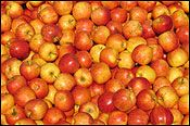 Apple Surprise: Remove the cores from apples. Pack the hole with peanut butter and refrigerate. When it is time to eat, remove the apples from the refrigerator. Slice and serve!