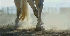 (10) horse gif | Tumblr
