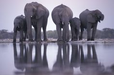 I have always wanted to see the Elephants in Africa!