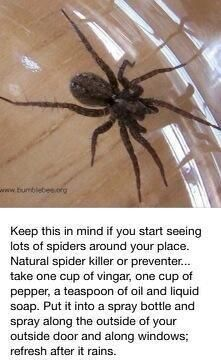 Easy Way To Get Rid Of Spiders #Various #Trusper #Tip