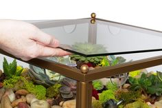 Here is an eye catching piece of furniture - one that doubles up as a neat terrarium display for your succulents and similar low maintenance indoor plants. Cactus Terrarium, Mini Terrarium, Glass Terrarium, Shadow Box Table, Glass Shadow Box, Types Of Succulents, Planting Succulents, Low Maintenance Indoor Plants, Red Brick Fireplaces