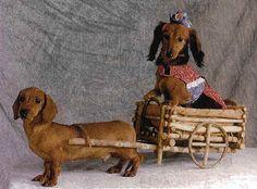 Darling Dachshunds - dachshunds Photo