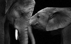 Pred rokom nemecký fotograf Wolf Ademeit pritiahol pozornosť ľudí svojimi čiernobielymi expresívnymi fotografiami zvierat v zoologických záhradách. Svoju zbierku rozšíril o ďalšie úžasné detailné snímky zo živočíšnej ríše.