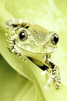 Green on green.  Frog