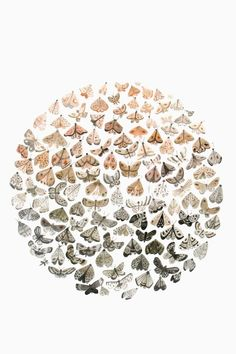 Moths/Sarah Burwash >>>i'm absolutely loving everything she does!!!