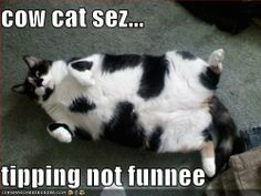 I am NOT a fan of cats but they are always the ones that do the wierdest things
