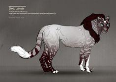 shedu cat - male