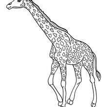 Dibujo Para Pintar Una Jirafa Dibujos Para Colorear Y Pintar Dibujos Par Paginas Para Colorear De Animales Animales Salvajes Para Colorear Dibujo De Jirafa