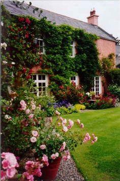Cottage Rose Gardens | jenn pham 32 weeks ago english cottage rose garden