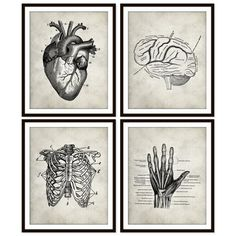 Vintage Anatomy Heart Rib Cage Brain Hand Skeletal by Picturality, $37.00