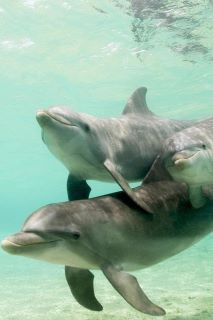 Dolphins ~ Sweet, beautiful, smart creatures & Love them! The Ocean, Ocean Life, Orcas, Beautiful Creatures, Animals Beautiful, Baby Animals, Cute Animals, Wild Animals, Dolphin Family