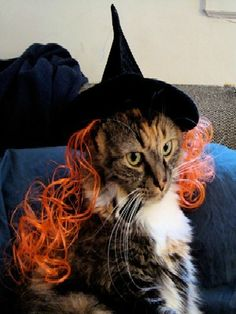 Need inspiration for your pet's Halloween costume? Check out some of our favorites! #Halloween #costumes #petcostumes