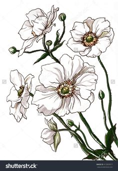 stock-photo-white-anemone-flower-bouquet-in-blossom-hand-drawn-watercolor-tropical-flowers-isolated-on-white-413303917.jpg (1100×1600)