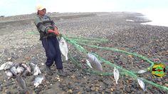 110 Ideas De Las Mejores Imágenes De Pesca And Moll Fotos De Pesca Pesca Fotos