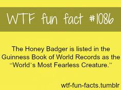 MOST FEARLESS ANIMAL MORE OF WTF-FUN-FACTS are coming HERE funny and weird facts ONLY