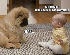 funny dog pictures with captions | Baby to puppy they make you poop outside Funny dog photo with captions: