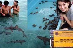 Wisata Pulau Pramuka di Pulau Pramuka mempunyai pesona keindahan laut. Anda ingin Paket Pulau Pramuka ??? Hub : Wisata Pulau Pramuka - Zona Travel Asia.