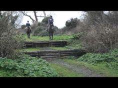 Fantastic brave horses!