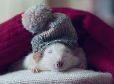 cute animal-kingdom