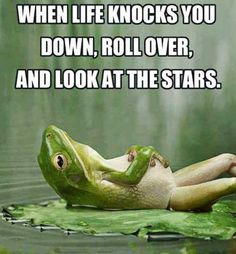 Even though feeling down and depressed is a natural part of life, that doesn't mean that you can't find ways to feel better. These funny quotes about life will help inspire you to smile and move forward. Words Quotes, Me Quotes, Funny Quotes, Funny Pics, Daily Quotes, Frog Quotes, Quotes To Live By Wise, Laugh Quotes, Funniest Pictures