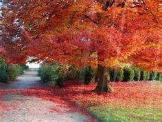 Autumn 30 Ideas On Pinterest Autumn Fall Wallpaper Desktop Wallpaper Fall