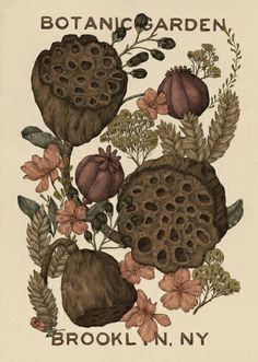 jessica roux - I know some people are wigged out by lotus pods but I love them.