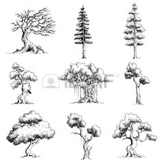 illustration of set of tree on isolated white background Stock Vector - 12178237 Tree Sketches, Art Drawings Sketches, Sketch Art, Plant Sketches, Landscape Sketch, Landscape Drawings, Tree Drawings Pencil, Tree Pencil Sketch, Art Du Croquis