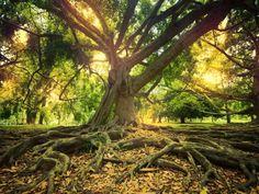 Απόσπασμα από το μπεστ σέλερ του Neale Donald Walsch «Συζήτηση με το Θεό για το Θάνατο», Εκδόσεις Η Δυναμική της Επιτυχίας  Η ελπίδα είναι η πύλη προς την πεποίθηση, η πεποίθηση είναι η πύλη προς τη γνώση, η γνώση είναι η πύλη προς τη δημιουργίακαι η δημιουργία είναι η πύλη προς την εμπειρία. Η … Tree Roots, Parenting Hacks, The Dreamers, Psychology, Survival, Outdoor Decor, Plants, Plumbing Problems, Beautiful