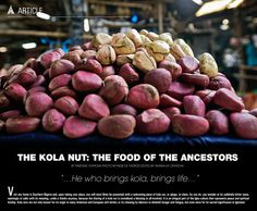 Kola Nut - Symbolic Uses: As a symbol it is used in West Africa by the Igbos of Nigeria to grace social rituals of hospitality as welcome offerings to guests; as sacred offering in religious rites and prayers; in ancestor veneration; and in important life events such as weddings, naming ceremonies, funerals and memorials.Read More: http://www.afrostylemag.com/ASM9/the_kola_nut.html