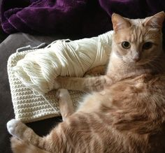 Illuminate Crochet: Crocheting for Cats: Important Things to Remember