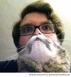 Half man half cat
