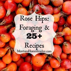 Rose Hips Foraging and Recipes Learn how to harvest and use this natural, free source of Vitamin C! Foraging for Rose Hips, health benefits of rose hips and recipes for using rose hips Healing Herbs, Medicinal Plants, Herbal Remedies, Natural Remedies, Edible Wild Plants, Gula, Montana, Planting Roses, Wild Edibles