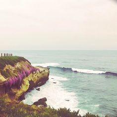 La Jolla   . . . . #beautiful #sandiego #lajolla #flowers #pacific #oceanlove #instaview #travelgram #instagood #iloveit #sheisnotlost #livelovetravel #findsomebeautifulplacetogetlost #wishyouwerehere #california #lajollalocals #sandiegoconnection #sdlocals - posted by Tessa  https://www.instagram.com/_iamtessa_. See more post on La Jolla at http://LaJollaLocals.com